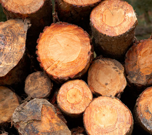 Why the Lumber Industry and ETF May Cry 'Timber!' | ETF Trends