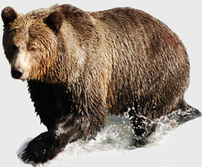 Bear Market ETFs