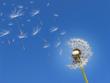 Wind ETFs