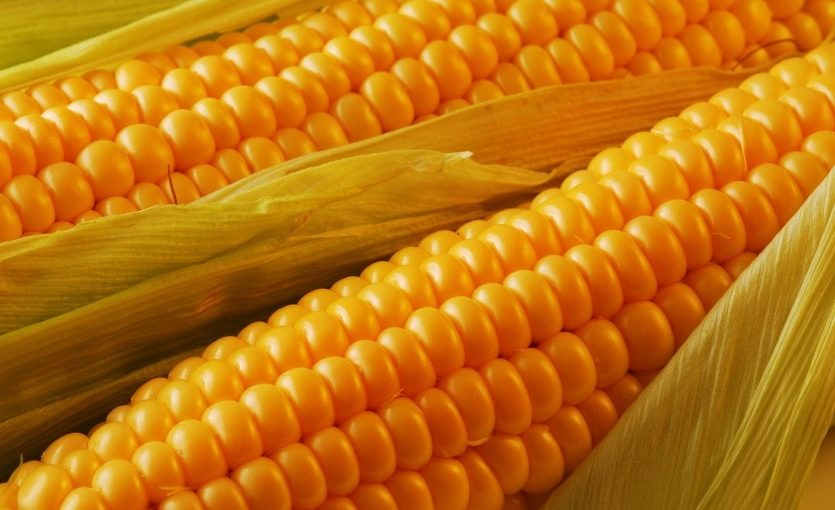 CORN Fund Challenges For ETF of May Honors