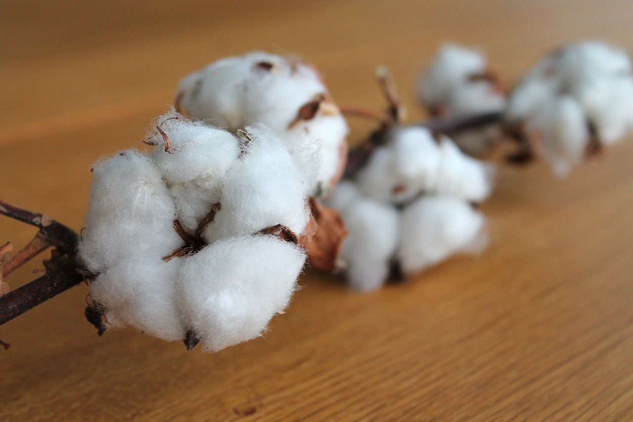 cotton-etn-faces-challenges
