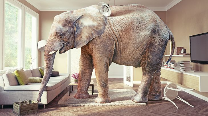 The Elephant in the Room: Portfolio Construction and Systematic Risk