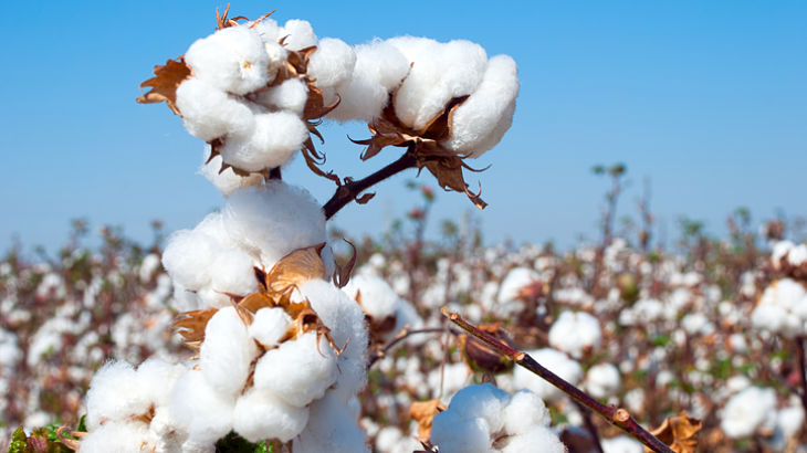 Pressure Remains on the Cotton ETN