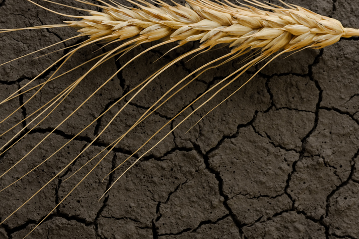 Grains Commodity ETFs Rally as Drought Threatens Supply