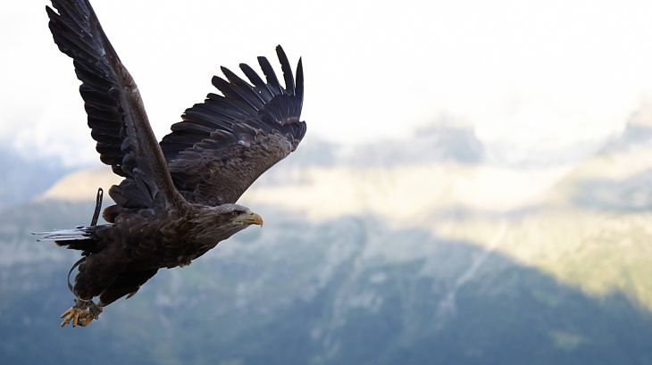 Hawks, Hawks Everywhere State of the Markets Update