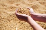 Soybean ETF May Be Digging Out of Its Long-Term Bottom