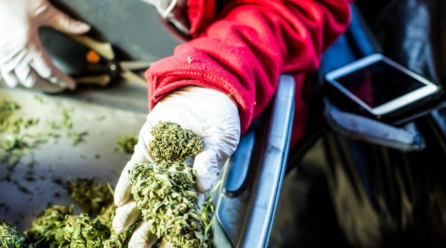 Marijuana ETF is a Big Hit with Investors