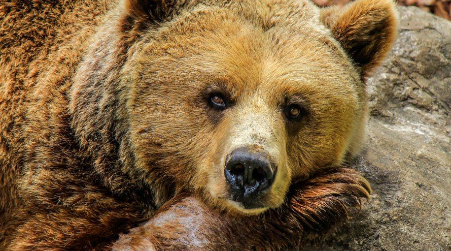 ETF Response to a Bear Market Possibility