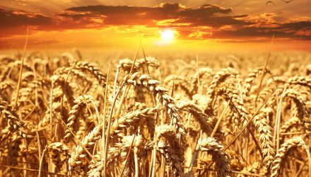 Weather Concerns Help Wheat ETF Flourish
