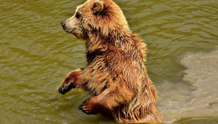 Seeking Protection Against Bears Instead of Corrections