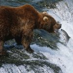 Signs That a Bear Market May be Coming
