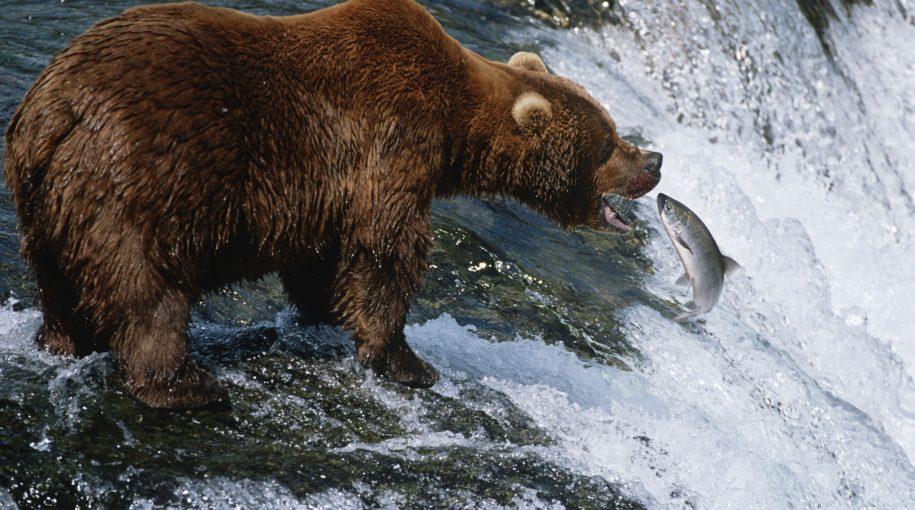Signs That a Bear Market May be Coming