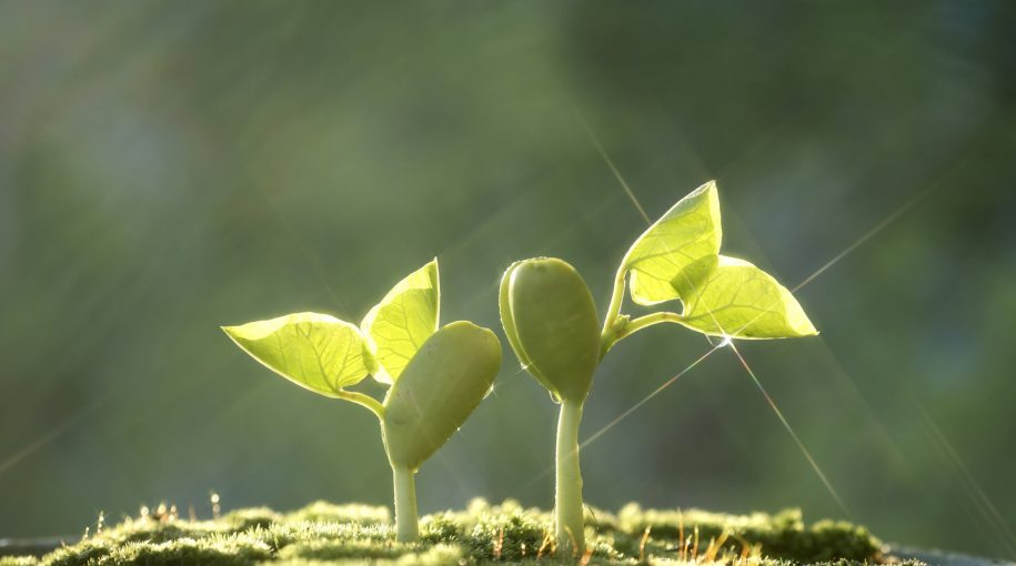 How to Find Quality Growth in a Volatile World