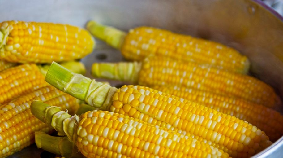 Corn ETF Surged on Brazilian Weather Concerns