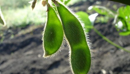 Soybean ETFs React to Trade Spat with China