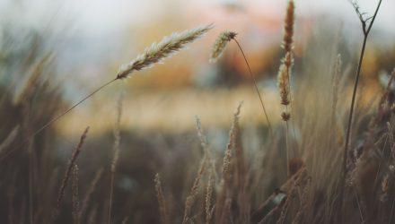 Grain ETFs Rebound as China Buys American Again