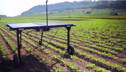 smart weed killing robots