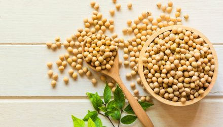Soybean ETF Surges After a Harrowing Month