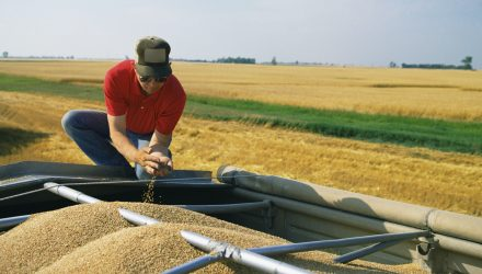 Wheat ETF Grows on Potential Weather Damage
