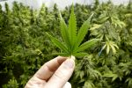 Marijuana ETF Boosted by Coca-Cola's Interest in Weed Drinks