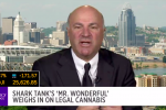 Kevin O'Leary Won't Be Investing in Cannabis