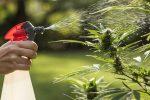 Marijuana-ETFs-Take-a-Hit-as-Volatility-Drags-Down-Cannabis-Stocks