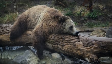 Morgan Stanley Strategist Stays Bearish