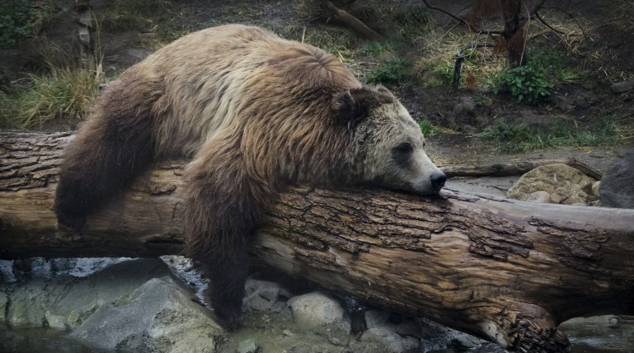 Morgan Stanley Strategist Stays Bearish