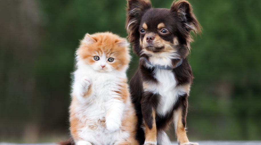 ProShares Grooms New ETF for Pet Care Industry