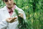 Marijuana ETF Boosted by Altria, Cronos Cannabis Rumor