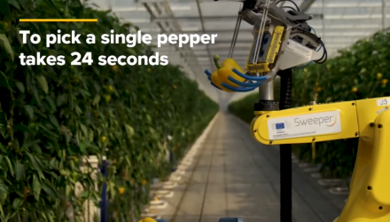 Watch This AI Robot Pick Peppers With A Tiny Saw