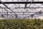 6 Small-Cap Cannabis Companies to Watch in 2019