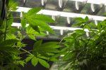Marijuana ETF 'YOLO' is in the Works