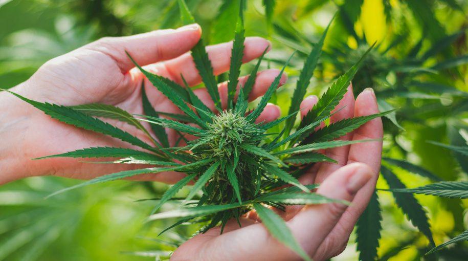 Marijuana ETFs to Access Growing Cannabis Outlook