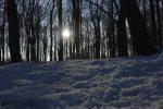 Natural Gas Prices Fall as Polar Vortex Eases