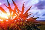 Pair of Marijuana ETFs Cross the $1B Mark in Assets