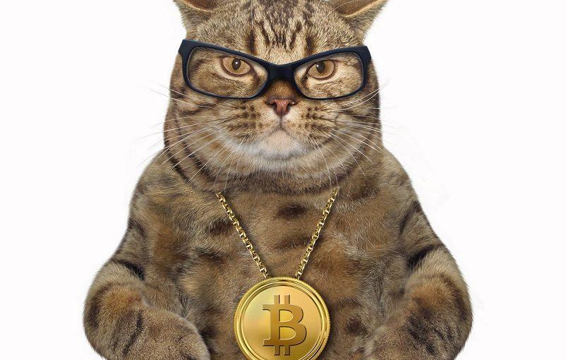 Bitcoin Tear Continues As BTC Breaches $8,000