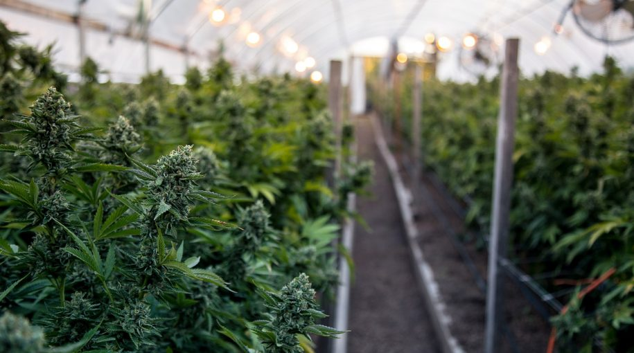 Could Illinois Marijuana Legalization Boost The Marijuana ETF Market?