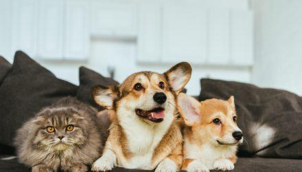A Potent Pet Idea With PAWZ ETF