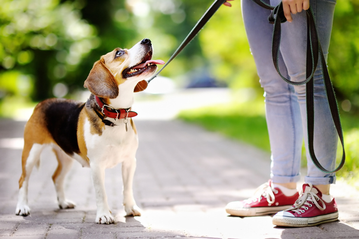 Data Bodes Well For Powerful Pet Care ETF