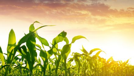 ETF of the Week: The Teucrium Corn Fund (NYSE: CORN)