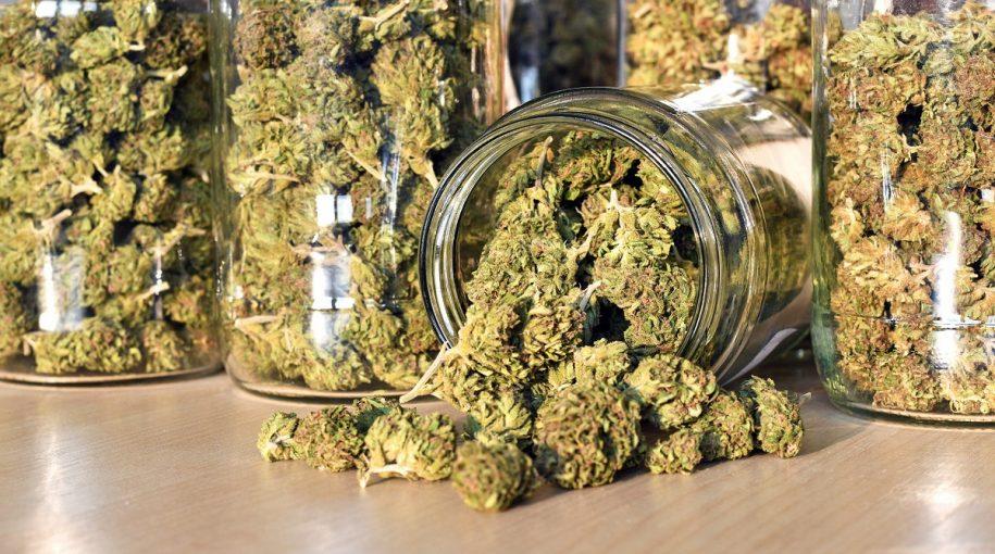 Good News For Cannabis Industry Ahead of Tilray, Canopy Earnings