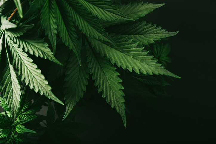 6 Challenges to Cannabis Investing We Still Need to Overcome