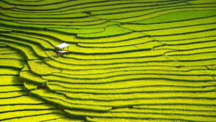 China Issues Green Bonds to Address Environmental Issues