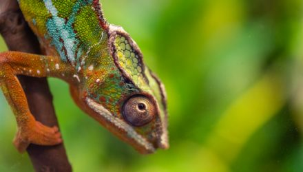 Invest Like a Chameleon: Change Your Colors as the Environment Changes