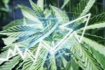 Plenty Of Potential For The POTX Cannabis ETF