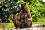 10 Bearish ETF Plays to Hedge Against Potentially Weak Earnings