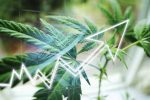 ETF of the Week Cambria Cannabis ETF (TOKE)