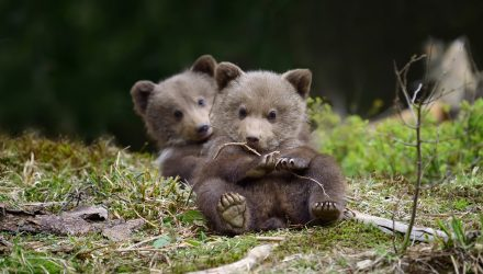 Goldman Sachs: Risky 2020 Could Bring Mini Bear Market for Bonds