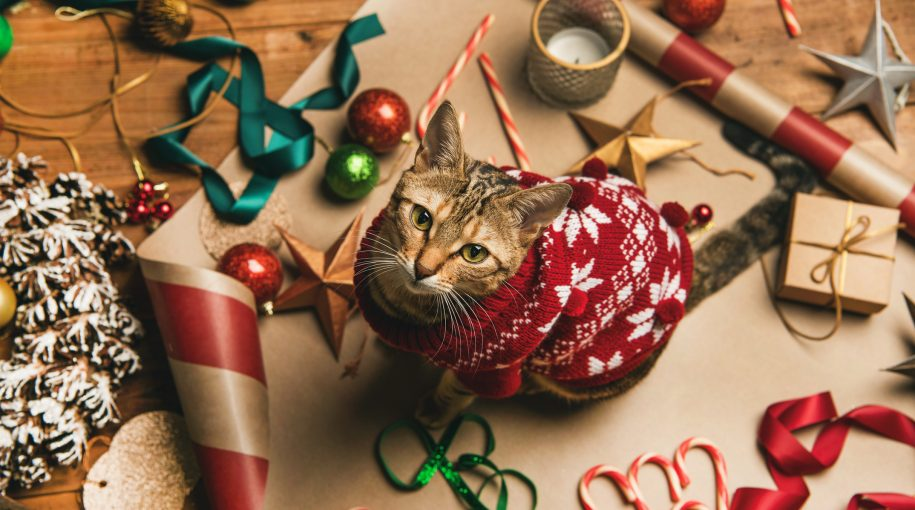 """Gift Giving for Pets Could Boost """"PAWZ"""" ETF This Christmas"""